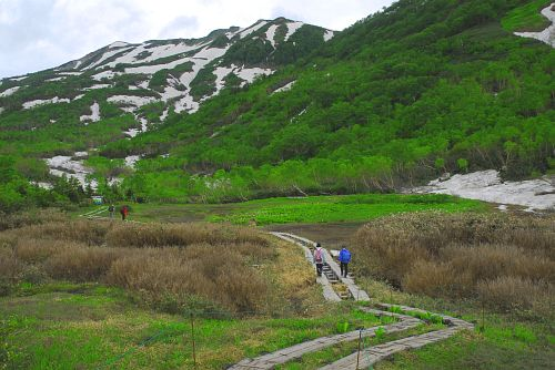 小谷村 栂池自然園 残雪と新緑-2