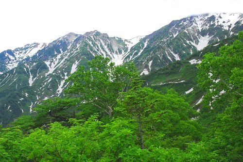 otari_tugaike_0607_ha019.jpg