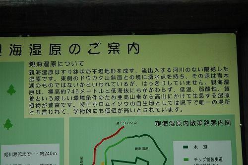 oyomi_0607_ha001.jpg