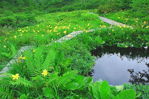 地蔵沼とニッコウキスゲ