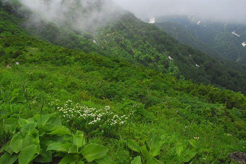 登山道沿い