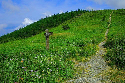 美ヶ原高原の散策路