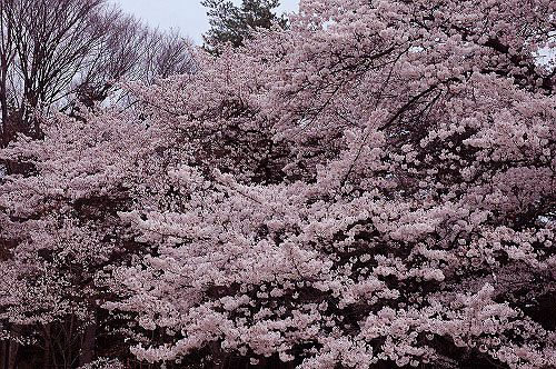 松本市 護国神社-1