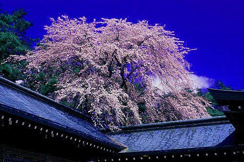 松本市 護国神社-2