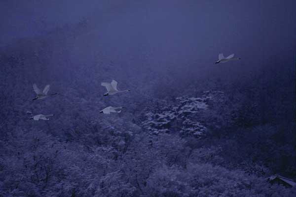 犀川ダム湖   4