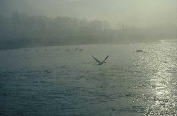 犀川ダム湖 16