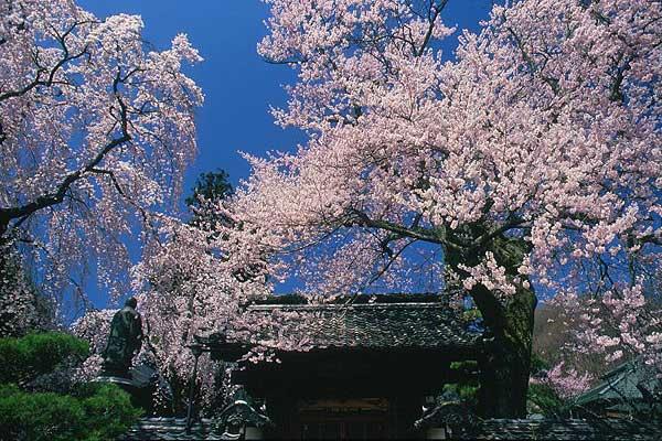 飯田市 経蔵寺