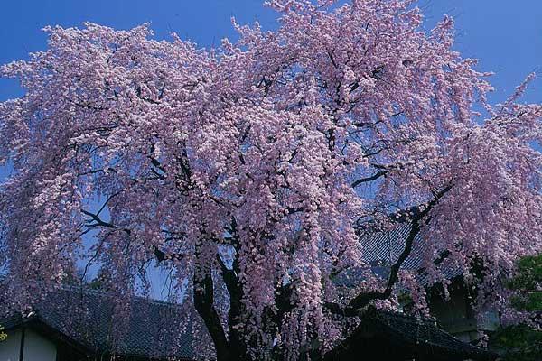 飯田市 黄梅院