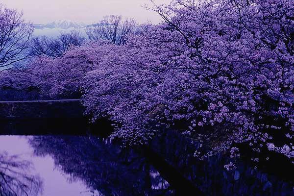 松本市 松本城