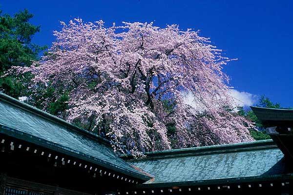 松本市 美須々 護国神社