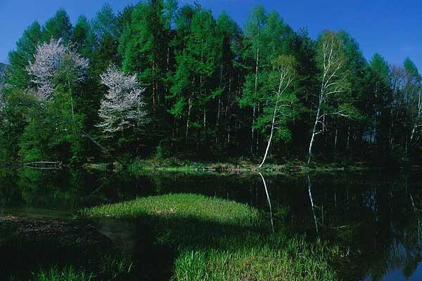 松本市 安曇 乗鞍高原 ちどり池
