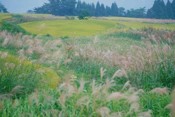 小谷村土倉・そば畑と稲