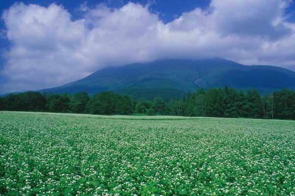信濃町黒姫・そば畑と黒姫山