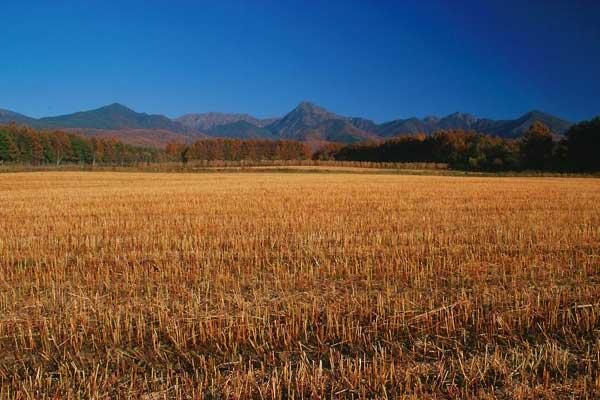 茅野市玉川・収穫後のそば畑と八ヶ岳